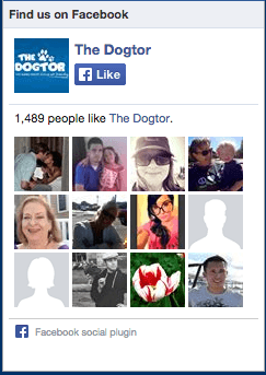 Thedogtor 1 Rated Emotional Support Animal Letter Service